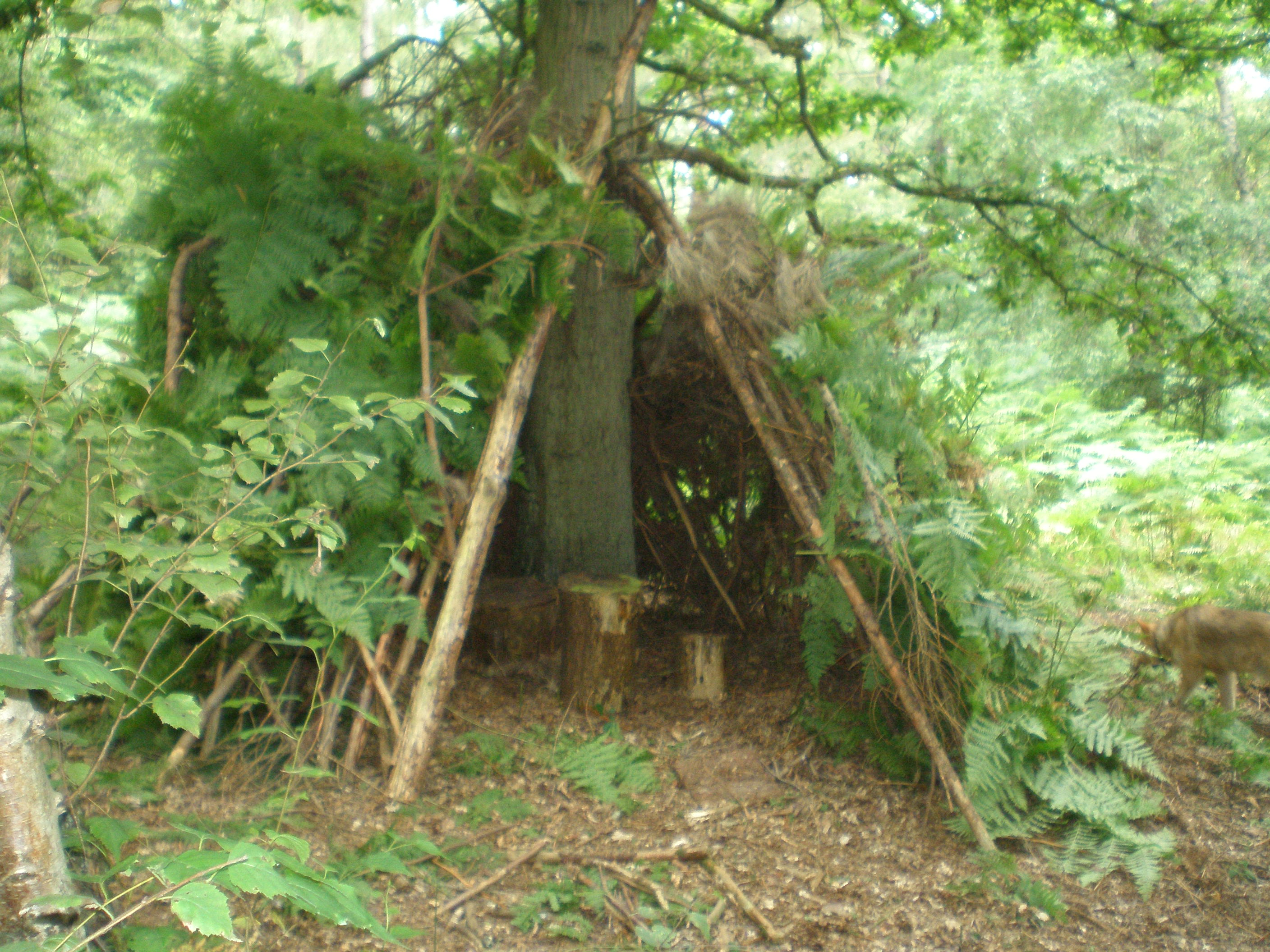 Den Building Competition In Bourne Wood Friends Of