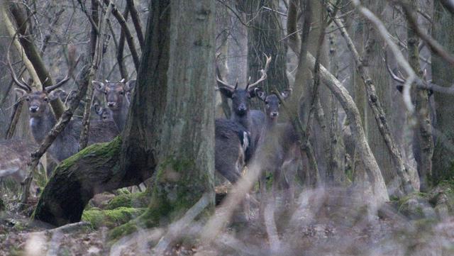deer in bourne woods