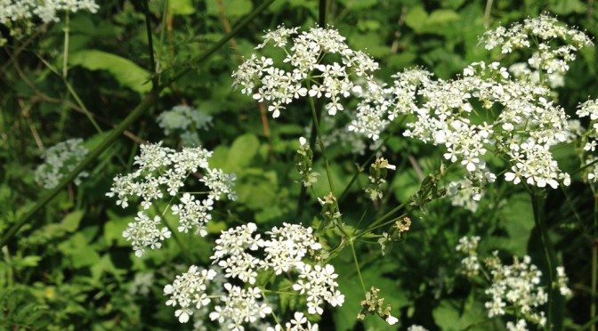 Identify Wild Flowers And Berries With Naturetale App