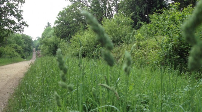 Grasses Walk With Dr Richard Jefferson