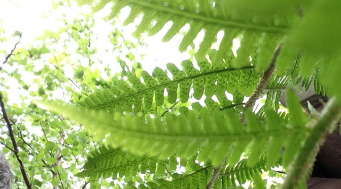 fern in bourne wood