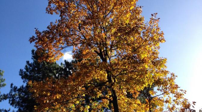 autumn trees bourne wood