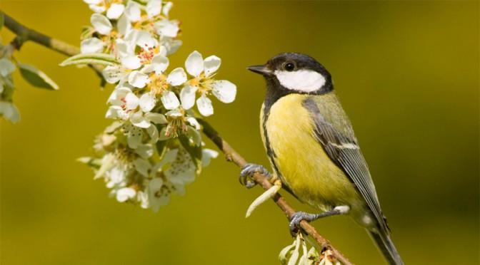 Spring Bird Walk 2016