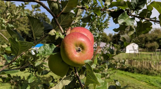 Orchard Open Day 2018