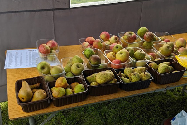 a selection of apples and pears