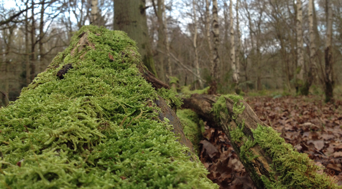 moss on tree in wood